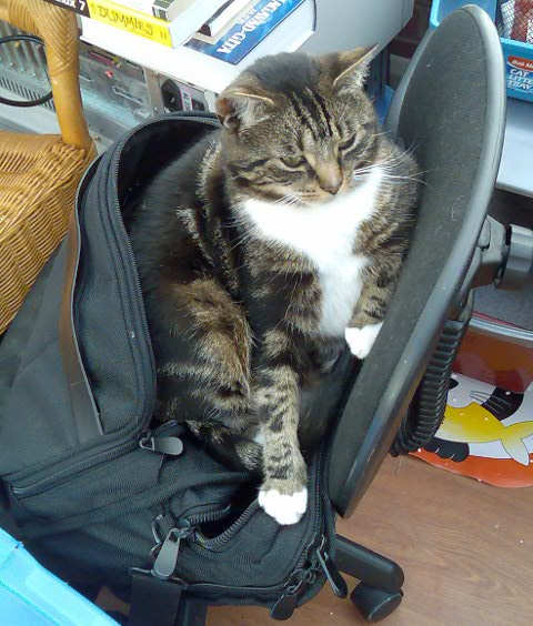 Jaz in my laptop bag